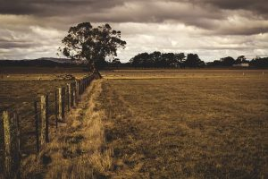 היתרונות של בניית גדר גן